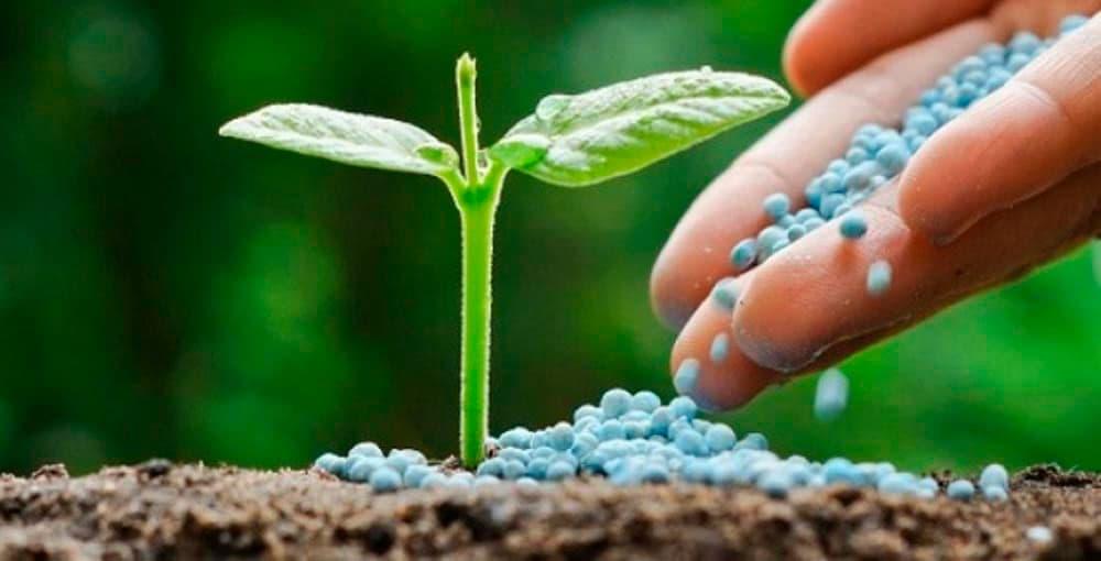 Os agricultores fundaram duas novas cooperativas, a Agrícola Brasil Ltda, hoje Cotrifred, e também a Cooperativa de Insumos Agrícolas Ltda, administradas pelo Presidente Luiz.