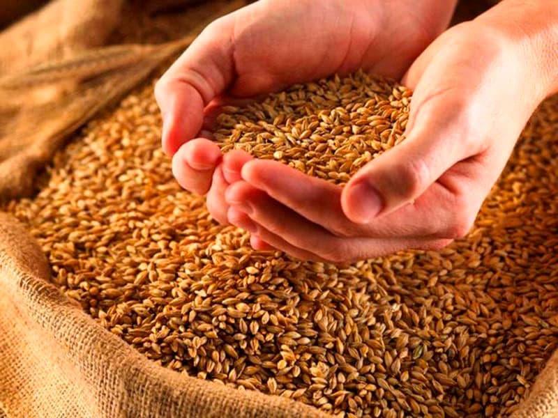 Neste ano foi recebido os primeiros 10 mil sacos de trigo colhidos em Frederico Westphalen, o número de associado triplicou, chegando a 61.