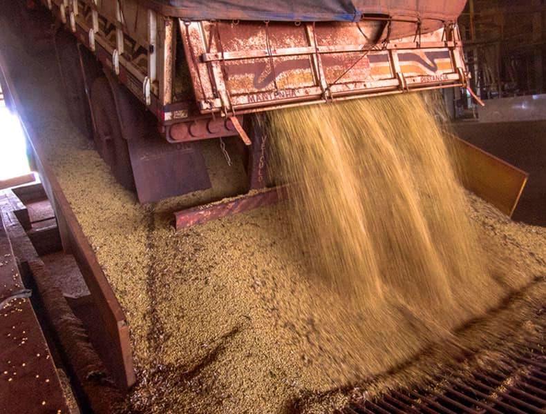 A Cotrifred viveu a primeira super safra de soja da sua história, ficando com suas instalações superlotadas.